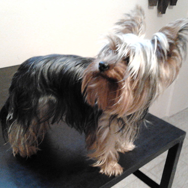 Teljes körű kutyakozmetika szolgáltatás Debrecenben