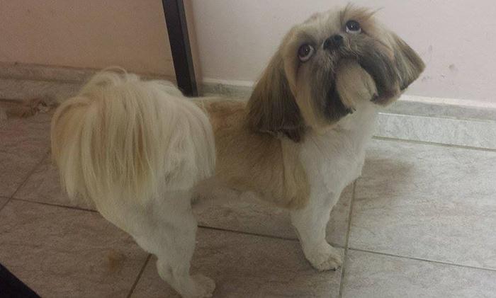 Teljes körű kutyakozmetika szolgáltatások Debrecenben